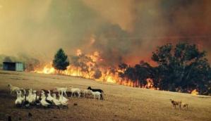 bush_fire_australia_E1